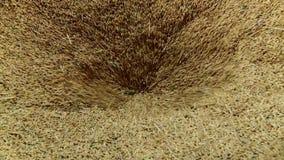 粮仓 干燥五谷 玉米 燕麦 麦子农业文化特写镜头 影视素材