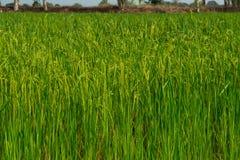 粮食作物 免版税图库摄影