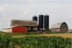 精华美国的农场 库存照片
