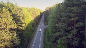 精密上部看法路运行在晴朗和遮荫杉木之间 股票录像