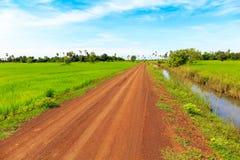精密土路通过绿色稻田在蓝天下 库存照片