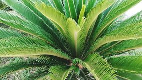 精密树棕榈 库存照片