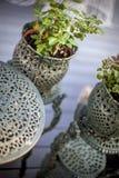 精密罐的植物 库存照片