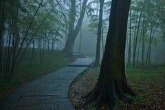 精密道路蜿蜒的低谷一个有薄雾的森林 库存照片