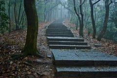 精密道路蜿蜒的低谷一个有薄雾的森林 库存图片