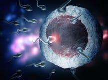 精液和卵细胞 库存例证