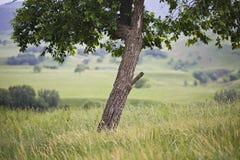 精瘦的结构树 库存图片