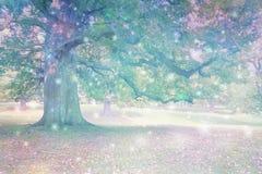 精神天体被吸引对古老橡树 免版税库存照片