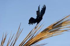 精神神秘的魔术鸟 免版税库存图片