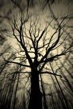 精神结构树 免版税库存照片