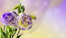 精美南北美洲香草花设计 免版税库存照片