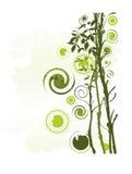 精美叶子结构树 免版税库存照片