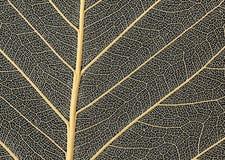 精美叶子胞状结构 库存照片