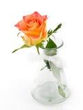 精美在白色背景的一个花瓶上升了 库存图片