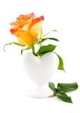 精美在白色背景的一个花瓶上升了 库存照片