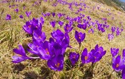 精美春天会开蓝色钟形花的草 免版税库存图片