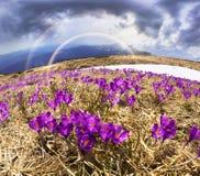 精美春天会开蓝色钟形花的草 库存图片