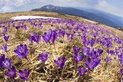 精美春天会开蓝色钟形花的草 图库摄影