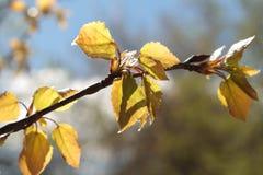 精美春天树枝杈在森林里 免版税库存图片