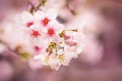 精美春天美丽的特写镜头开花在一模糊的backg 库存图片