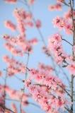 精美桃红色春天 免版税库存图片