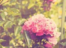 精美桃红色花卉背景 免版税库存图片