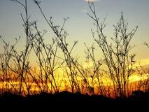 精美植物剪影在色的天空前面的 免版税库存图片