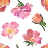 精美水彩玫瑰的无缝的样式 免版税库存图片