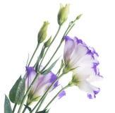 精美玫瑰花束 免版税库存照片