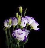 精美玫瑰花束 免版税库存图片