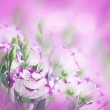 精美玫瑰花束 库存照片