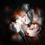 精美玫瑰花束 图库摄影