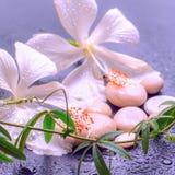 精美白色木槿,枝杈passionfl的意想不到的温泉概念 免版税图库摄影