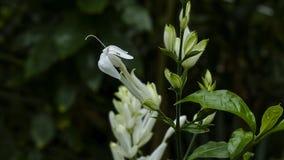 精美白色百合科花和绿色叶子 库存照片