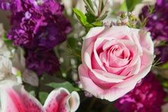 精美粉红色上升了 免版税图库摄影