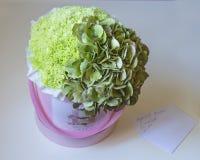 精美绿色八仙花属和康乃馨美丽的礼物花束在一个桃红色箱子在纸在白色背景 库存照片
