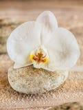 精美美丽的纯净的白色兰花 免版税图库摄影