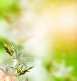 精美花会开蓝色钟形花的草花卉背景  库存图片
