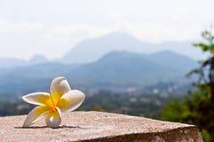 精美花前面老挝山 免版税库存照片