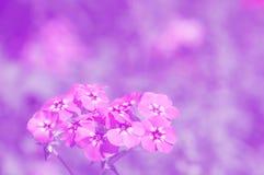 精美花卉背景在紫色树荫下  美丽的花,选择聚焦 库存照片