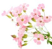 精美花粉红色 图库摄影