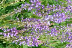 精美蓝色花卉生长在领域 免版税库存图片