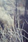 精采和美妙的霜 库存图片