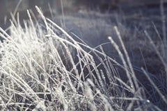 精采和美妙的霜 图库摄影
