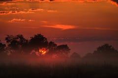 精采橙色阳光阐明云彩和草原Okavango三角洲 免版税图库摄影