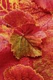 精采橙色,红色和黄色葡萄叶子背景  免版税库存照片