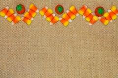 糖味玉米雪佛用南瓜 库存图片