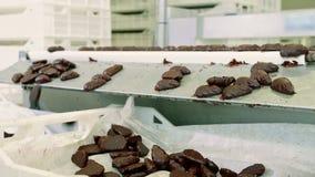 糖果工厂 说谎在传动机的巧克力糖 影视素材