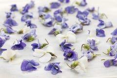 糖煮的紫罗兰 图库摄影