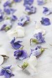 糖煮的紫罗兰 免版税库存图片